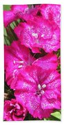 Sweet William From The Super Duplex Bluepoint Mix Beach Towel