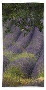Lavender Field, France Beach Towel
