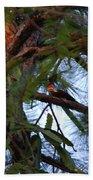 Pileated Woodpecker Beach Towel