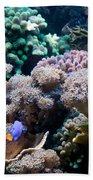Underwater Life Beach Towel