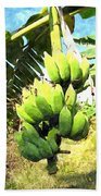 A Banana Field In Late Afternoon Sunlight With Sky And Clouds Beach Towel