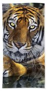A Bengal Tiger Portrait Endangered Species Wildlife Rescue Beach Towel