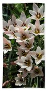 A Bouquet Of Miniature Tulips Celebrating The Spring Season - Vertical Beach Towel
