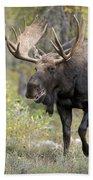 A Bull Moose Named Gaston Beach Towel