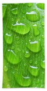 A Cleansing Morning Rain Beach Towel