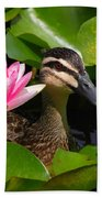 A Curious Duck And A Water Lily Beach Towel
