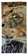 A Curious Lioness Beach Towel