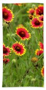 a field of Indian Blankets Beach Towel