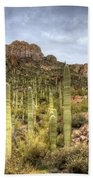 A Forest Of Saguaros  Beach Towel