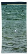 A Forster Tern Fighting The Winds Out At Sea Beach Towel