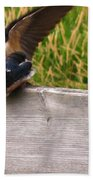 A Fourth Baby Barn Swallow Wants In On Lunch Beach Towel