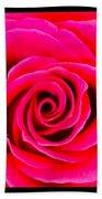 A Fuschia Pink Rose Beach Towel