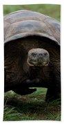 A Giant Tortoise Walks Along The Rim Beach Towel