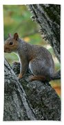 A Gray Squirrel Pose  Beach Towel