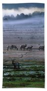 A Heard Of Elk Graze In A Misty Meadow Beach Towel