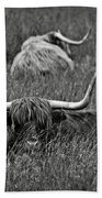 A Highland Cattle In The Scottish Highlands Beach Towel