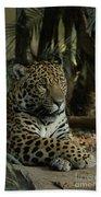 A Jaguar's Gaze Beach Towel