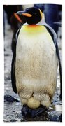 A King Penguin Holds Its Egg Beach Towel