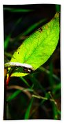 A Leaf... Beach Towel