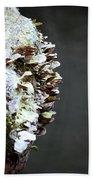 A Lichen Abstract 2013 Beach Towel