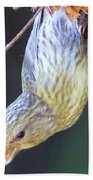 A Little Bird Eating Pine Cone Seeds  Beach Towel