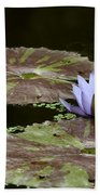 A Little Lavendar Water Lily Beach Towel