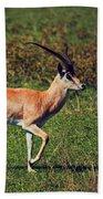 A Male Impala In Ngorongoro Crater. Tanzania Beach Towel