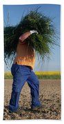 A Man Harvests Sedge To Be Used Beach Towel