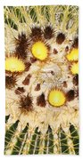 A Mexican Golden Barrel Cactus With Blossoms Beach Towel