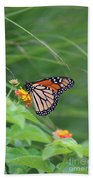 A Monarch Butterfly At Rest Beach Towel