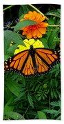 A Monarchs Colors Beach Towel