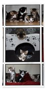 A Montage Of Kittens Beach Towel