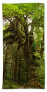 A Moss Covered Tree  In The Ho National Rain Forest Beach Towel