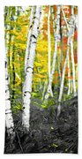 A Painting Autumn Birch Grove Beach Towel