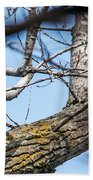A Pair Of Red-bellied Woodpeckers Beach Towel