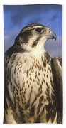 A Prairie Falcon At Dusk Beach Towel