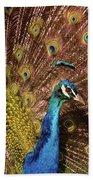 A Preening Peacock  Beach Towel