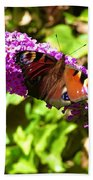 A Red Admiral On A Purple Budlier Beach Towel