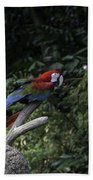 A Red Green And Blue Macaw On A Branch In The Jurong Bird Park Beach Towel