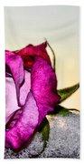 A Rose In Winter Beach Towel