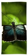 A Sara Longwing Butterfly Heliconius Beach Towel