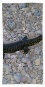 A Slow Salamander  Beach Towel