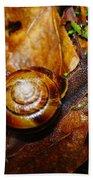 A Slow Snail Beach Towel