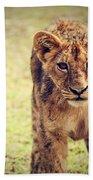 A Small Lion Cub Portrait. Tanzania Beach Towel