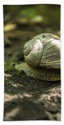 A Snail's Pace Beach Towel