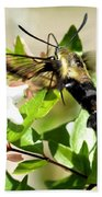 A Sphinx's Pollination Beach Towel