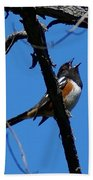 A Spotted Towhee Mid-song Beach Towel