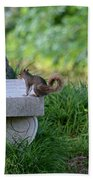 A Squirrel's Day Out Beach Towel