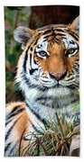 A Tigers Glance Beach Towel