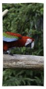 A Very Colorful And Bright Macaw Bird Perched On A Branch Beach Towel